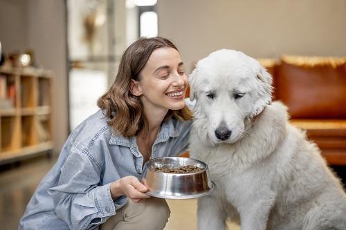 Croquettes médicalisées pour chien